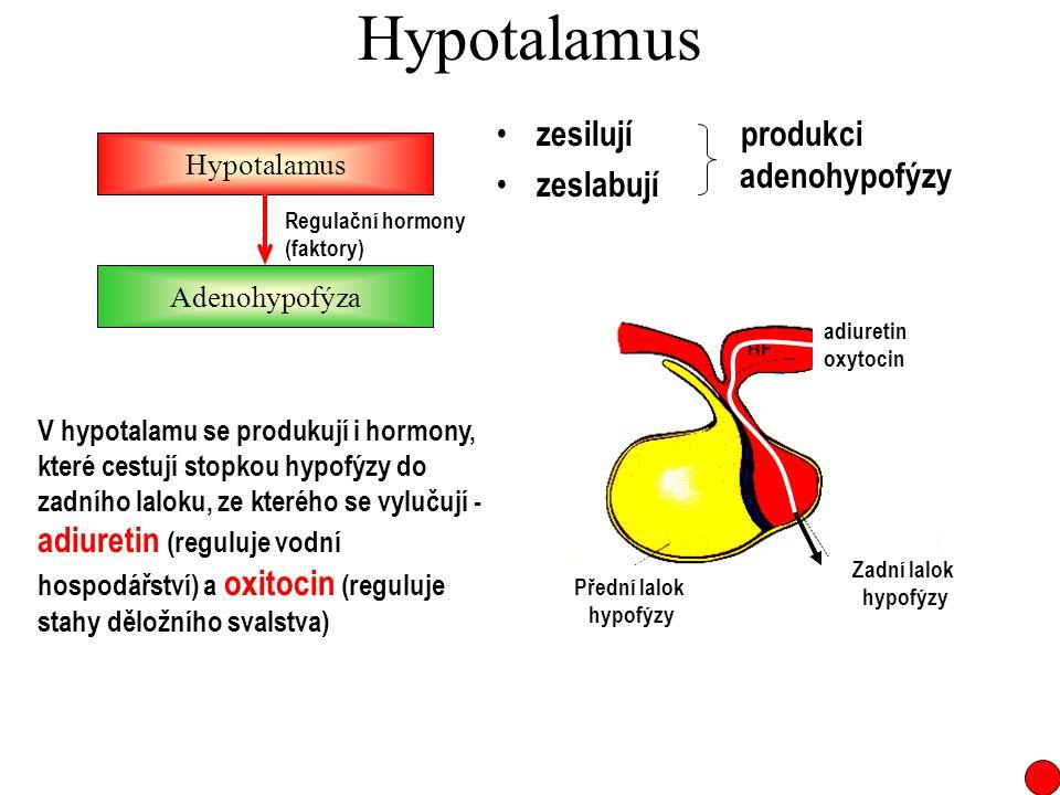 Hypotalamus zesilují zeslabují produkci adenohypofýzy Hypotalamus