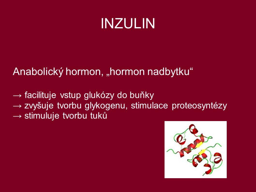 "INZULIN Anabolický hormon, ""hormon nadbytku"