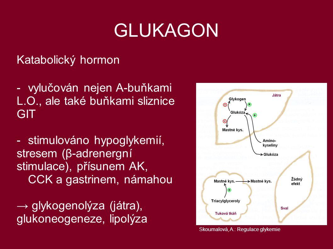 GLUKAGON Katabolický hormon