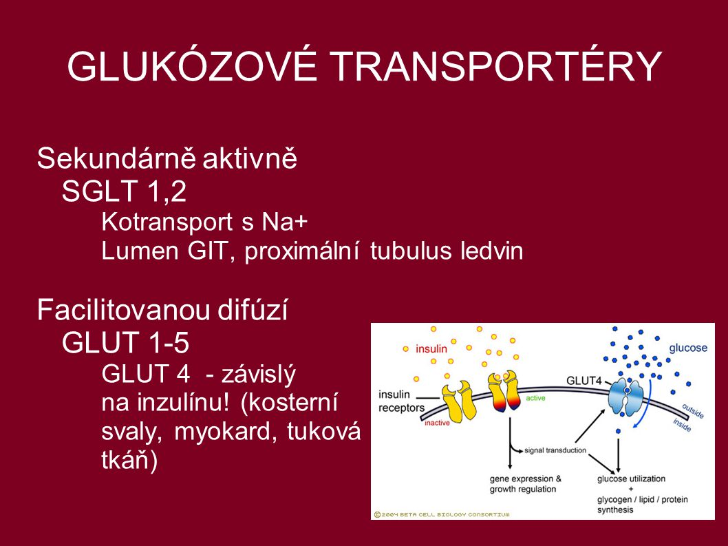 GLUKÓZOVÉ TRANSPORTÉRY