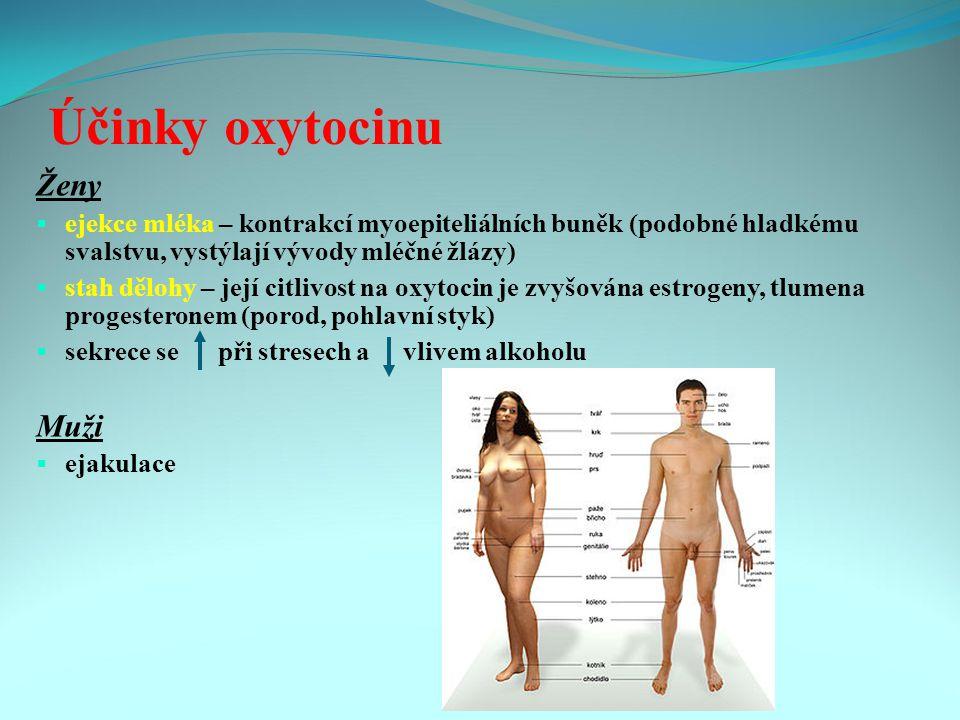 Účinky oxytocinu Ženy Muži