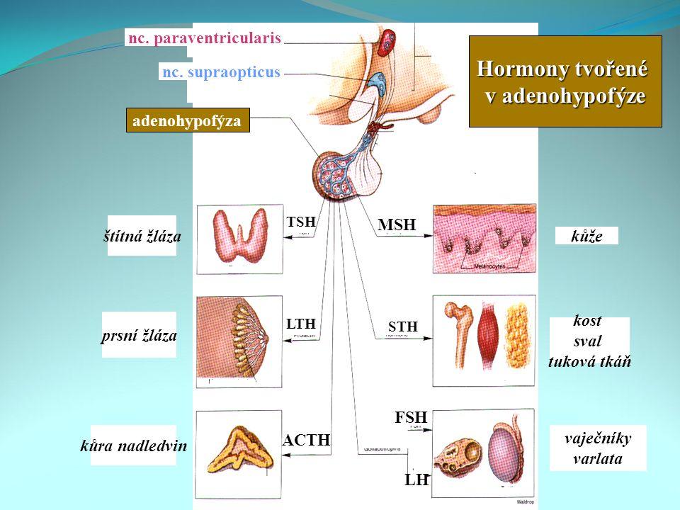 Hormony tvořené v adenohypofýze