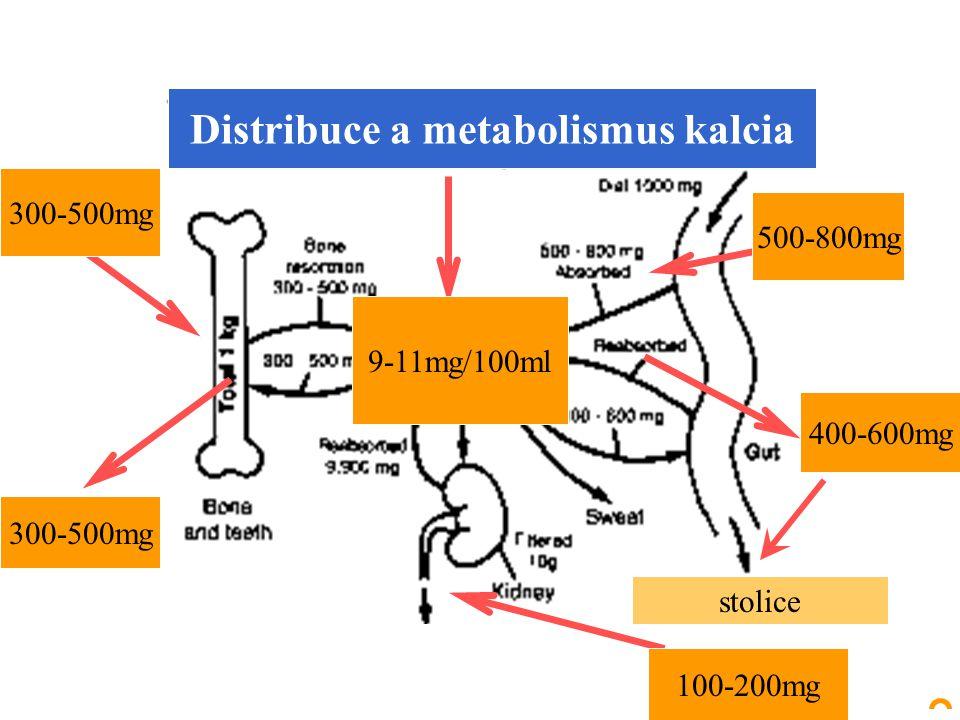 Distribuce a metabolismus kalcia