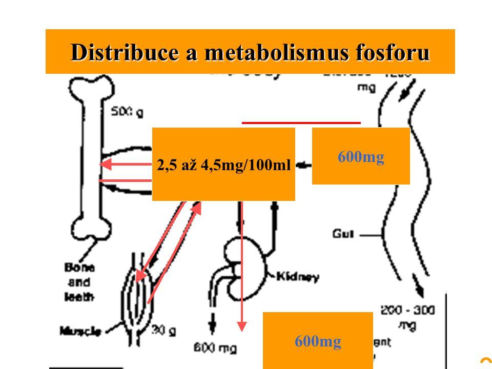 Distribuce a metabolismus fosforu