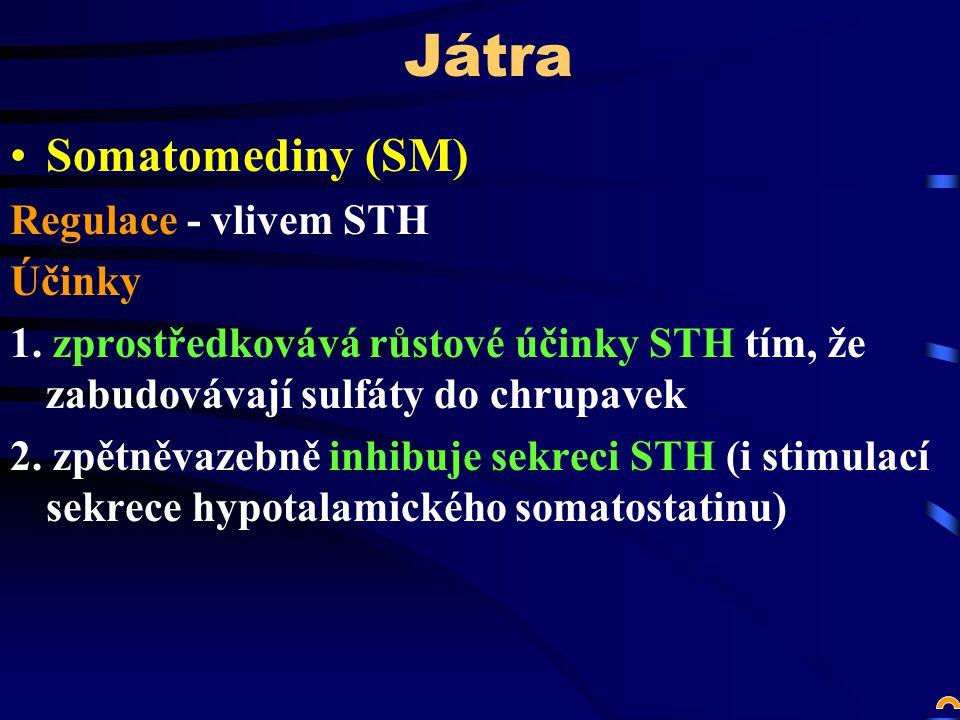 Játra Somatomediny (SM) Regulace - vlivem STH Účinky