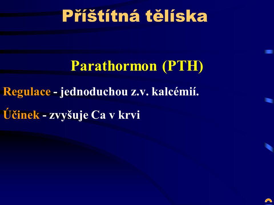 Příštítná tělíska Parathormon (PTH)