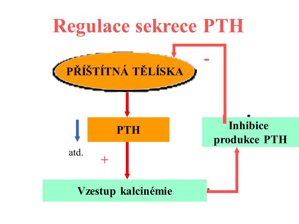 Regulace sekrece PTH - - + PŘÍŠTÍTNÁ TĚLÍSKA Inhibice PTH produkce PTH