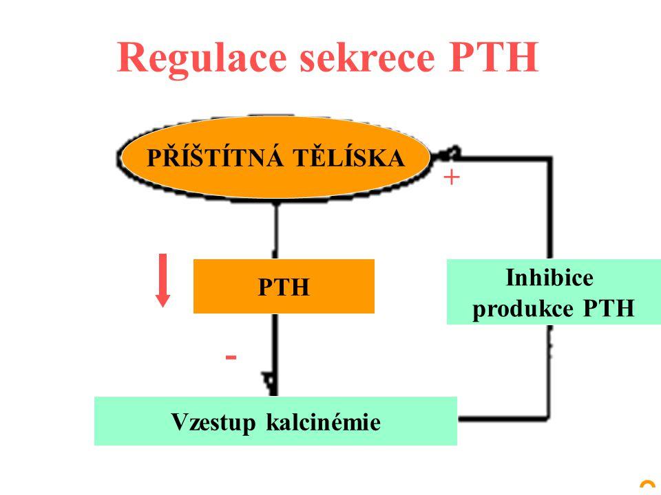 Regulace sekrece PTH - + PŘÍŠTÍTNÁ TĚLÍSKA Inhibice PTH produkce PTH