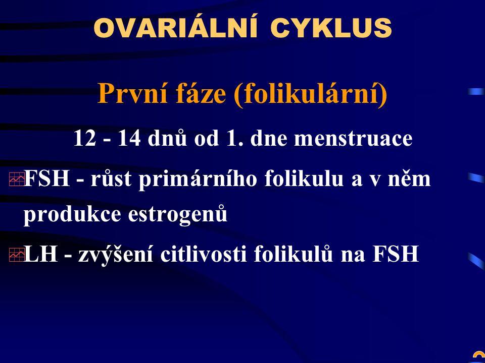 První fáze (folikulární)
