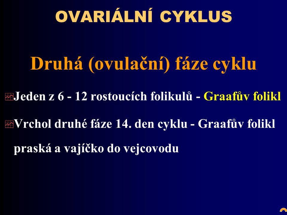 Druhá (ovulační) fáze cyklu