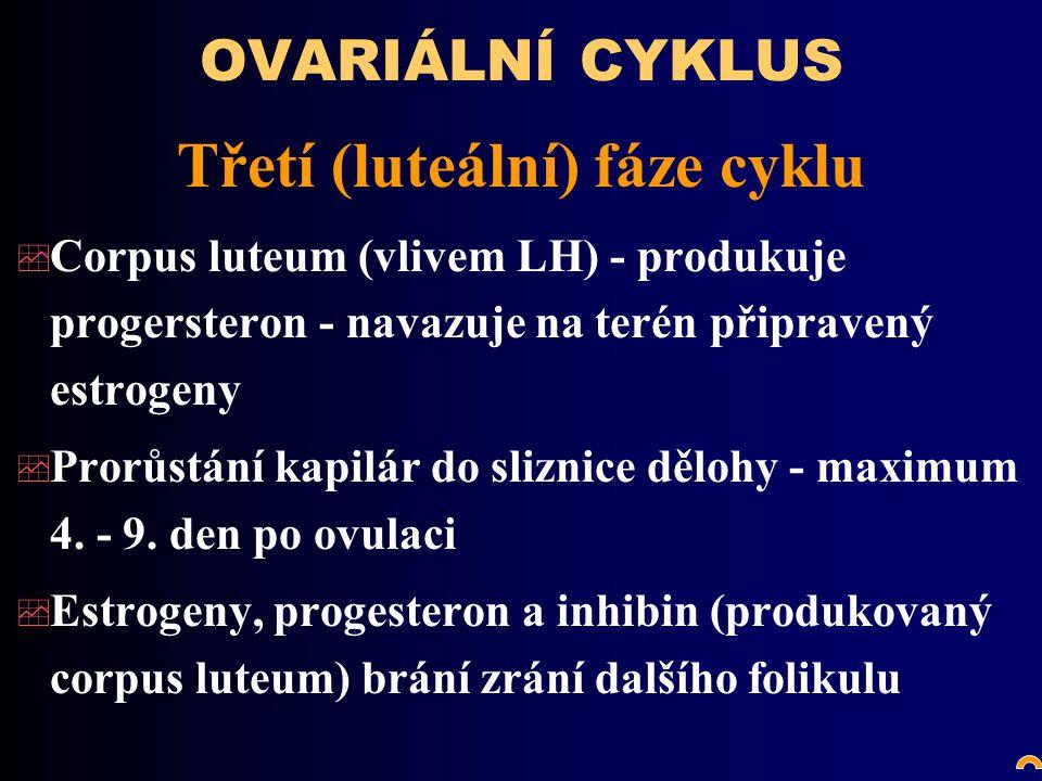 Třetí (luteální) fáze cyklu