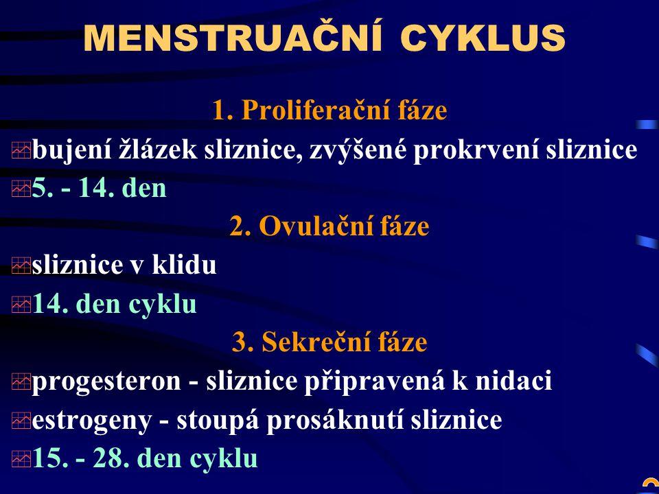 MENSTRUAČNÍ CYKLUS 1. Proliferační fáze
