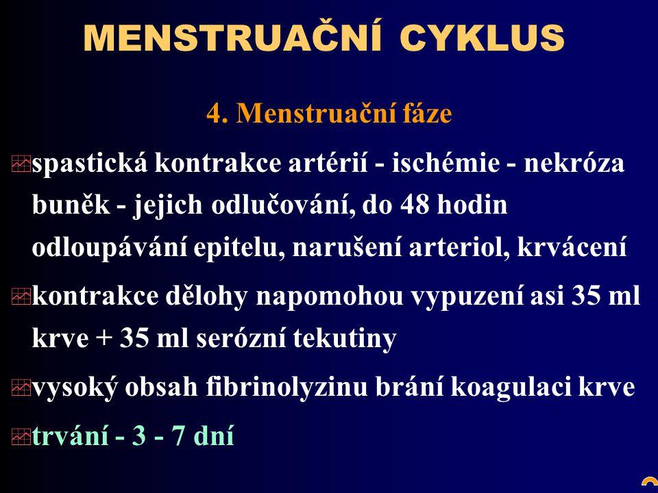 MENSTRUAČNÍ CYKLUS 4. Menstruační fáze