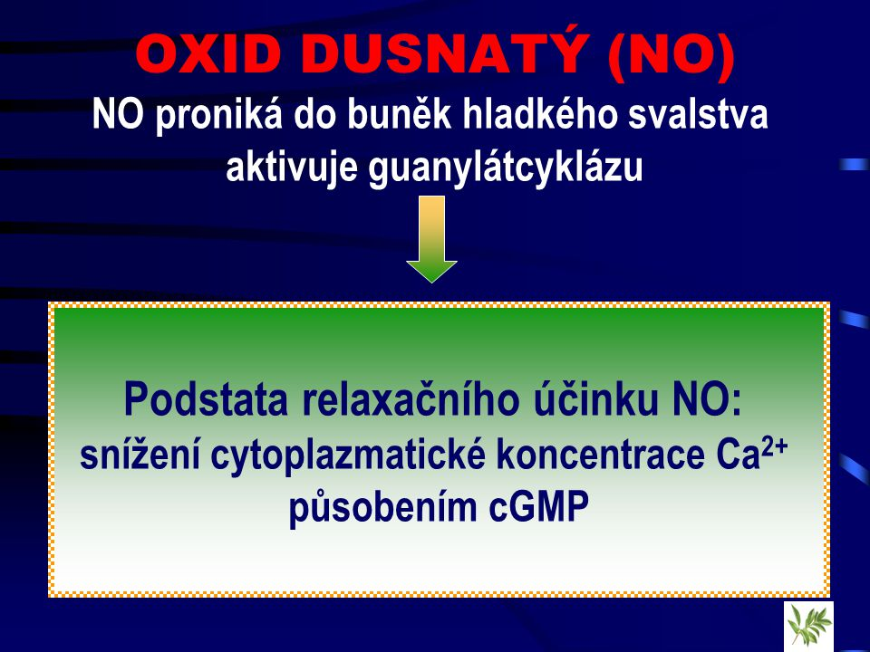 OXID DUSNATÝ (NO) Podstata relaxačního účinku NO: