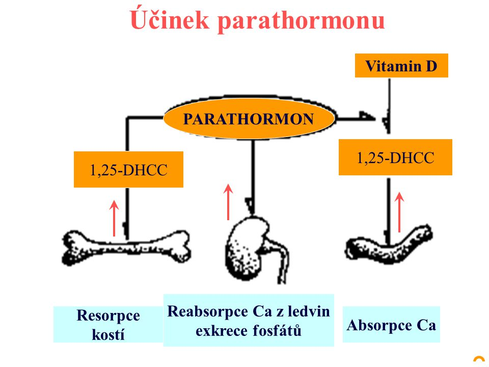 Účinek parathormonu Vitamin D PARATHORMON 1,25-DHCC 1,25-DHCC