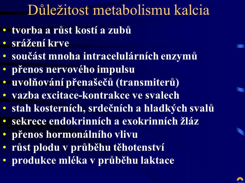 Důležitost metabolismu kalcia