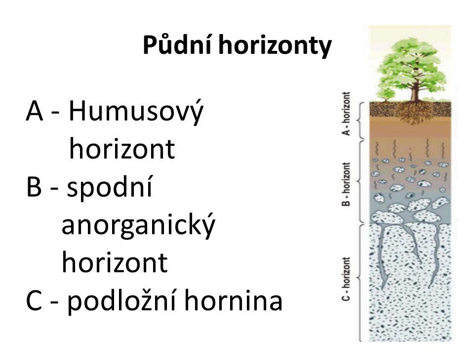 A - Humusový horizont B - spodní anorganický C - podložní hornina