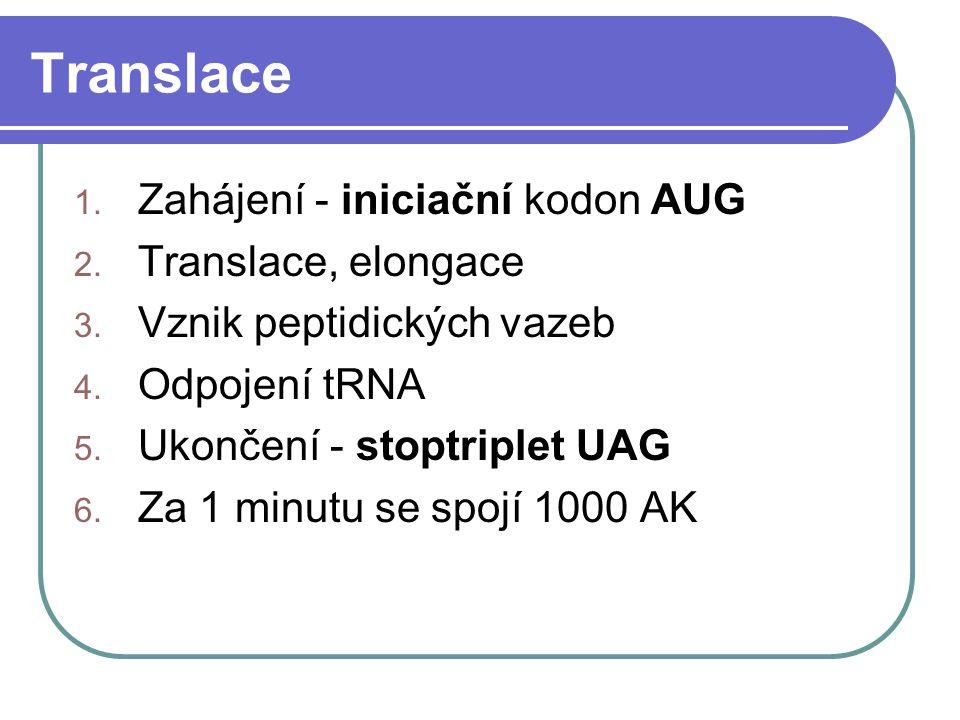 Translace Zahájení - iniciační kodon AUG Translace, elongace