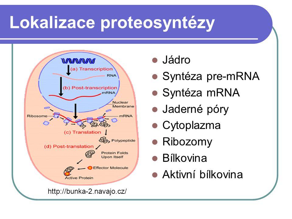 Lokalizace proteosyntézy