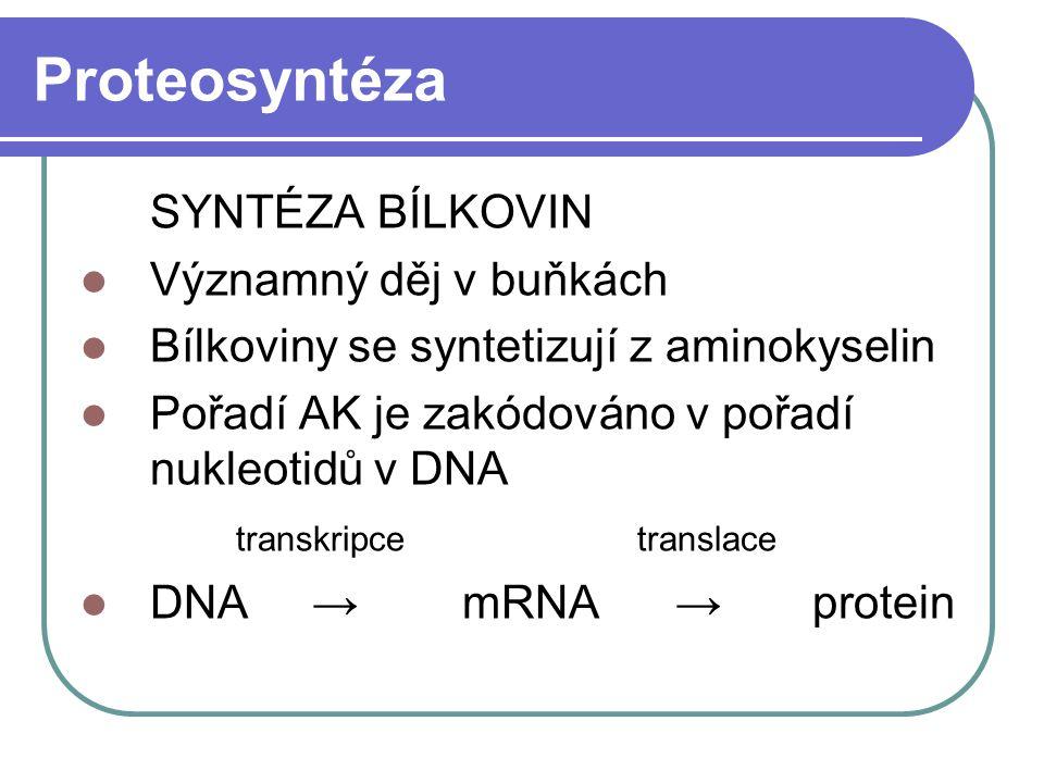 Proteosyntéza SYNTÉZA BÍLKOVIN Významný děj v buňkách