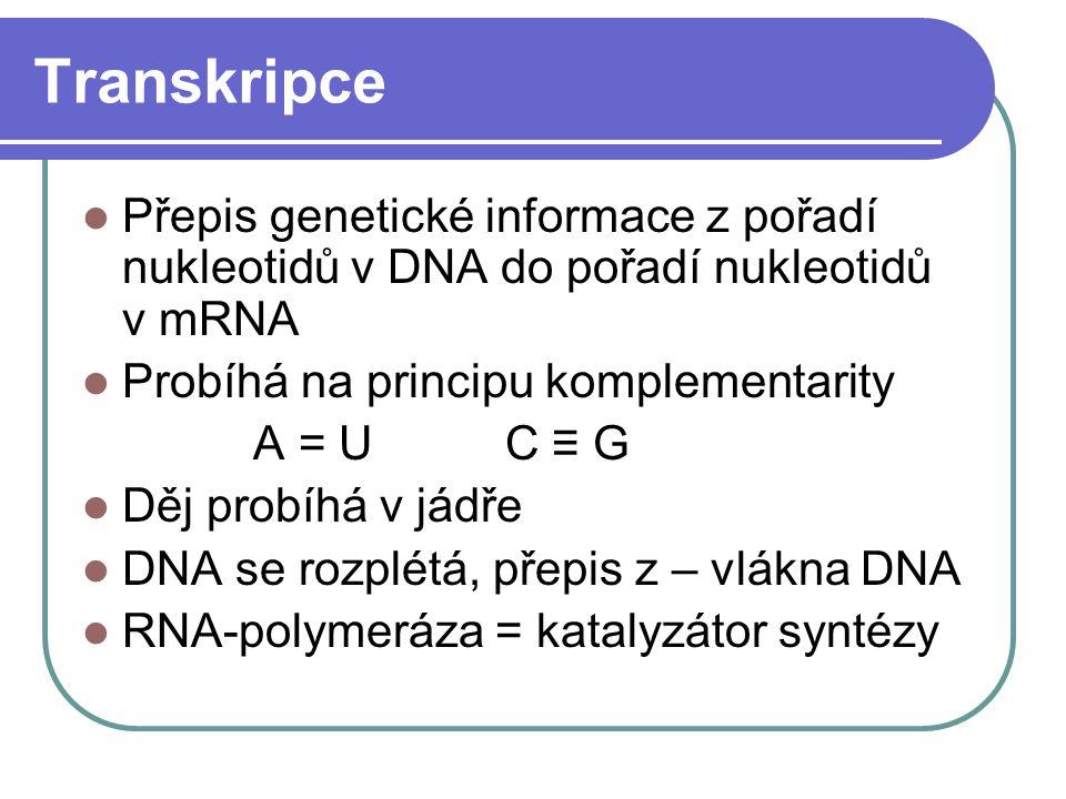 Transkripce Přepis genetické informace z pořadí nukleotidů v DNA do pořadí nukleotidů v mRNA. Probíhá na principu komplementarity.