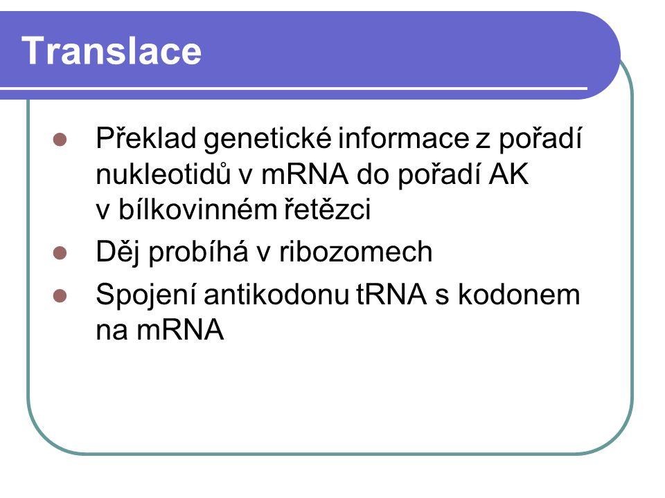 Translace Překlad genetické informace z pořadí nukleotidů v mRNA do pořadí AK v bílkovinném řetězci.