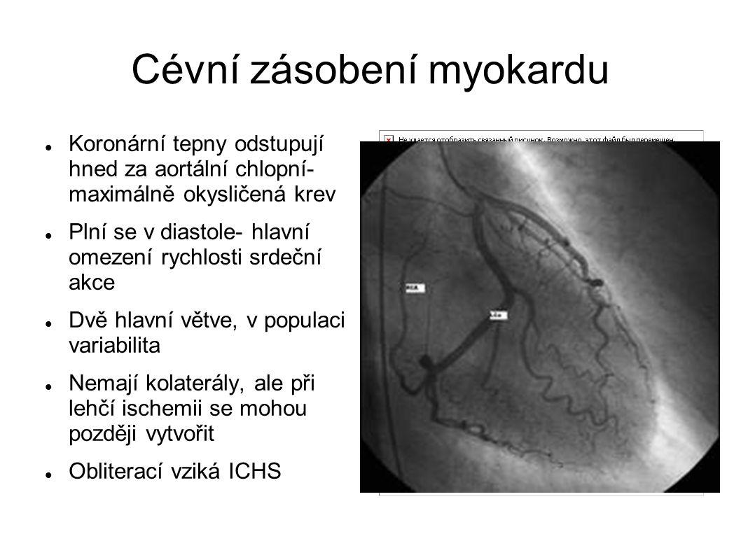 Cévní zásobení myokardu