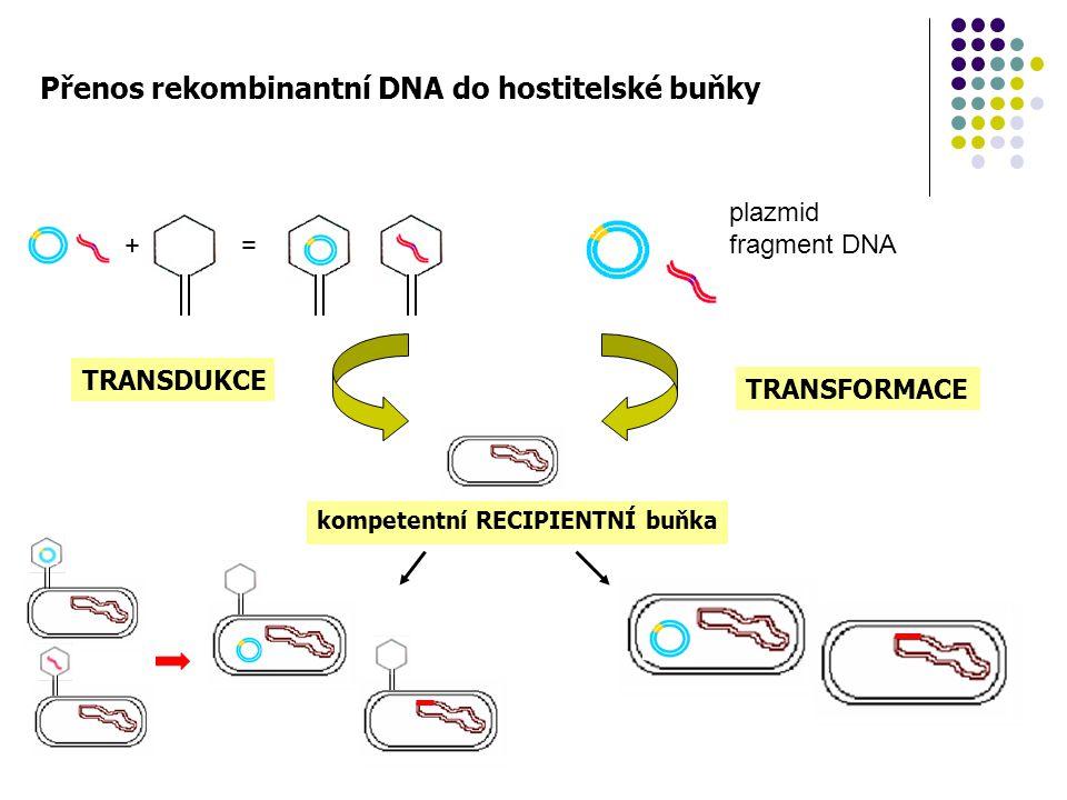 Přenos rekombinantní DNA do hostitelské buňky
