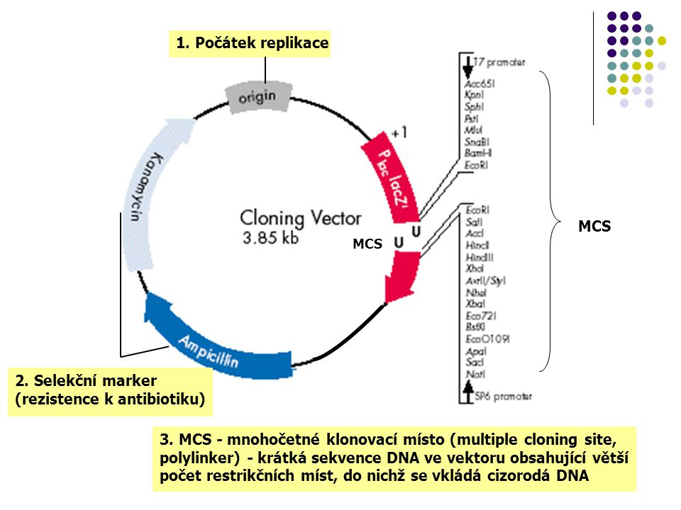 2. Selekční marker (rezistence k antibiotiku)