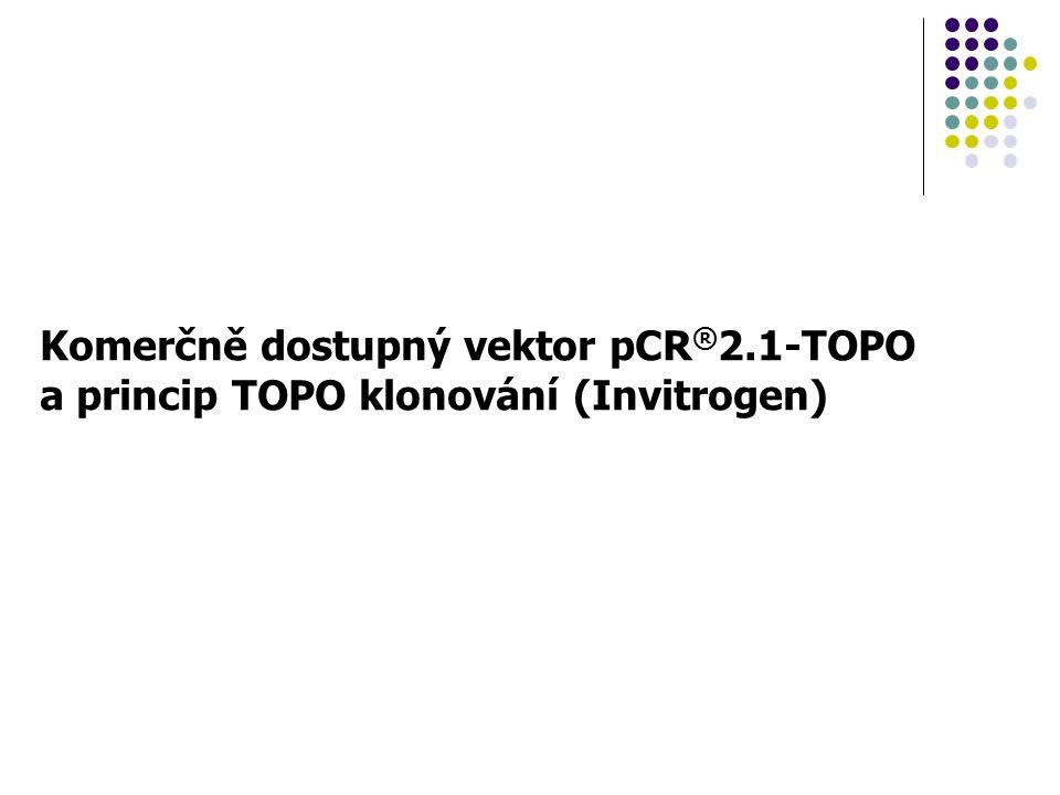 Komerčně dostupný vektor pCR®2.1-TOPO