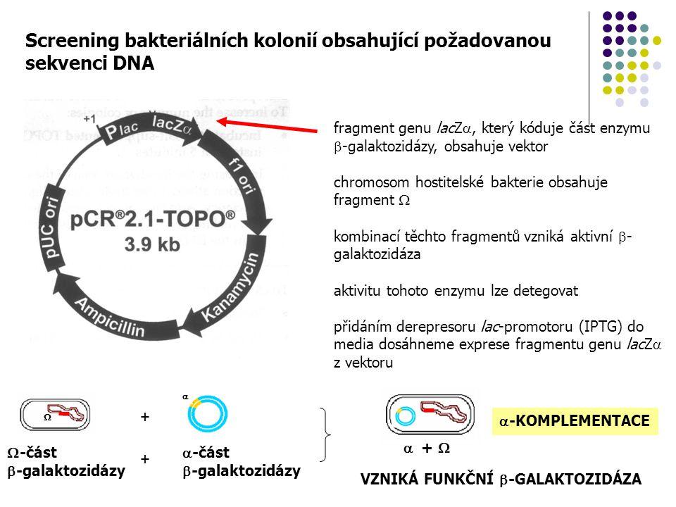 Screening bakteriálních kolonií obsahující požadovanou sekvenci DNA