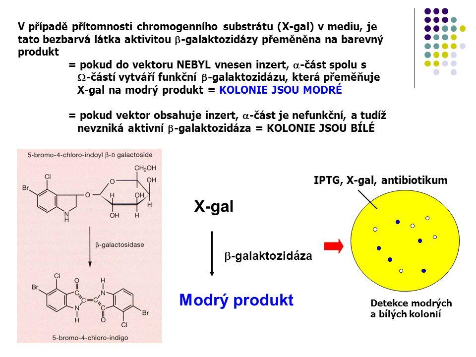 X-gal Modrý produkt -galaktozidáza
