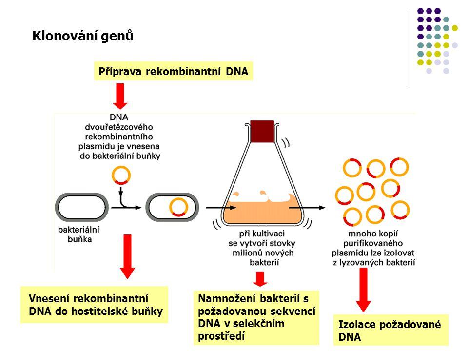 Klonování genů Příprava rekombinantní DNA