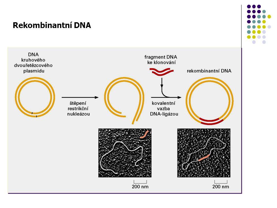 Rekombinantní DNA