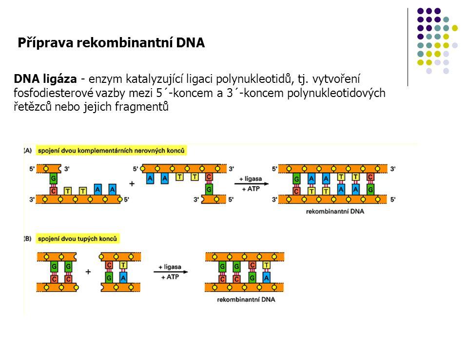Příprava rekombinantní DNA