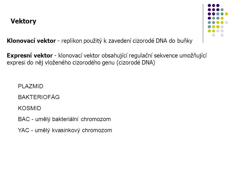 Vektory Klonovací vektor - replikon použitý k zavedení cizorodé DNA do buňky.