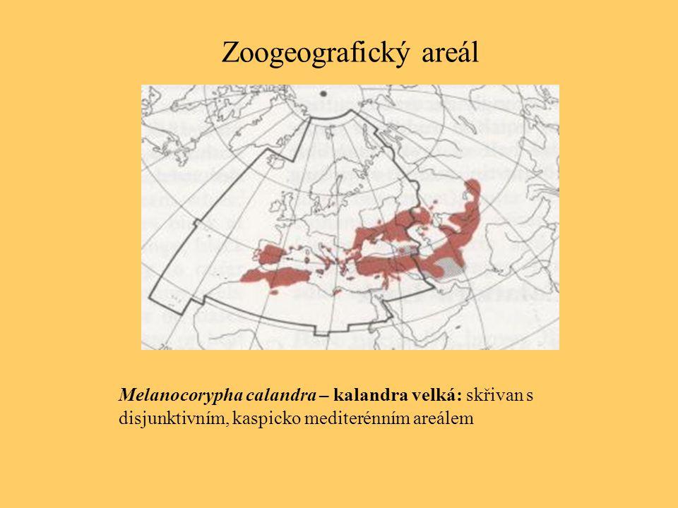 Zoogeografický areál Melanocorypha calandra – kalandra velká: skřivan s disjunktivním, kaspicko mediterénním areálem.