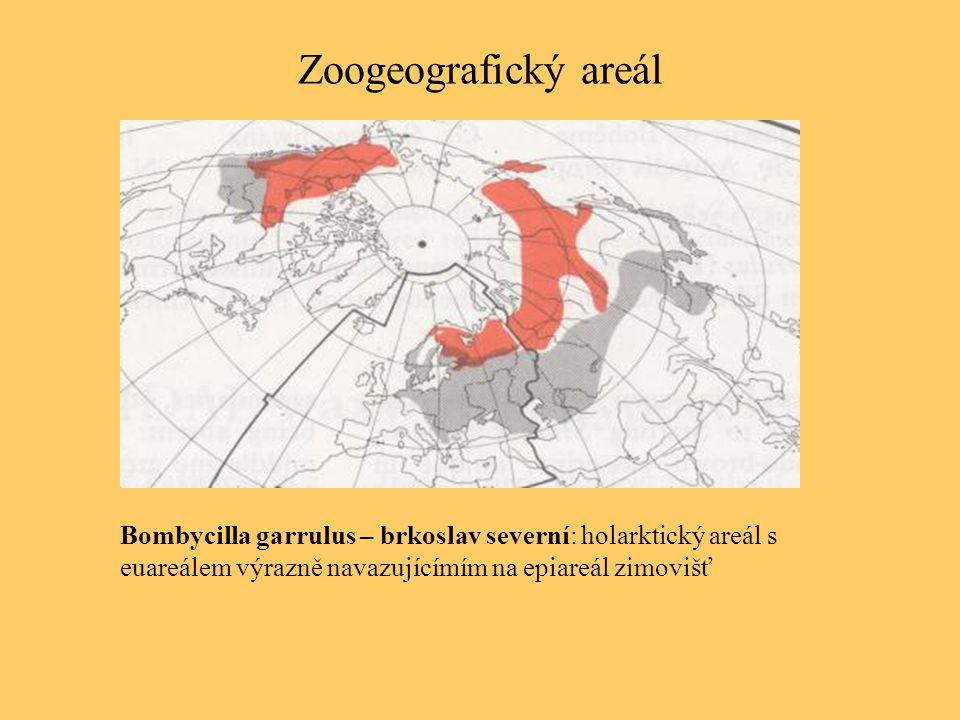Zoogeografický areál Bombycilla garrulus – brkoslav severní: holarktický areál s.