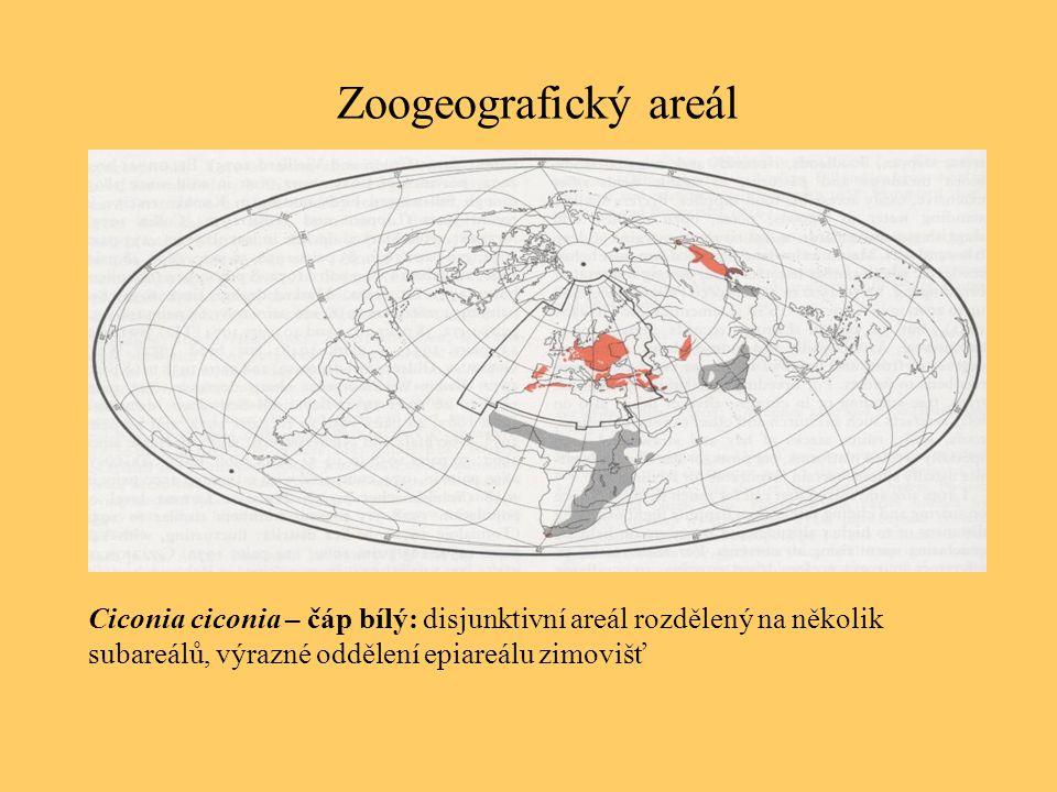 Zoogeografický areál Ciconia ciconia – čáp bílý: disjunktivní areál rozdělený na několik subareálů, výrazné oddělení epiareálu zimovišť.