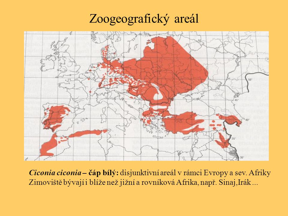 Zoogeografický areál Ciconia ciconia – čáp bílý: disjunktivní areál v rámci Evropy a sev. Afriky.