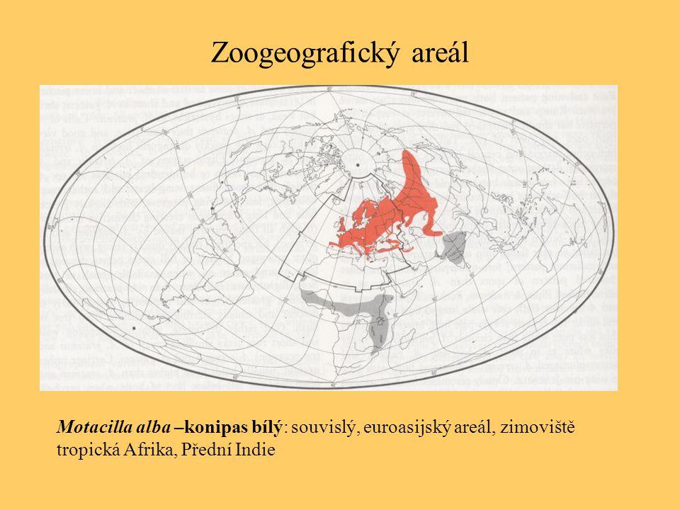 Zoogeografický areál Motacilla alba –konipas bílý: souvislý, euroasijský areál, zimoviště tropická Afrika, Přední Indie.