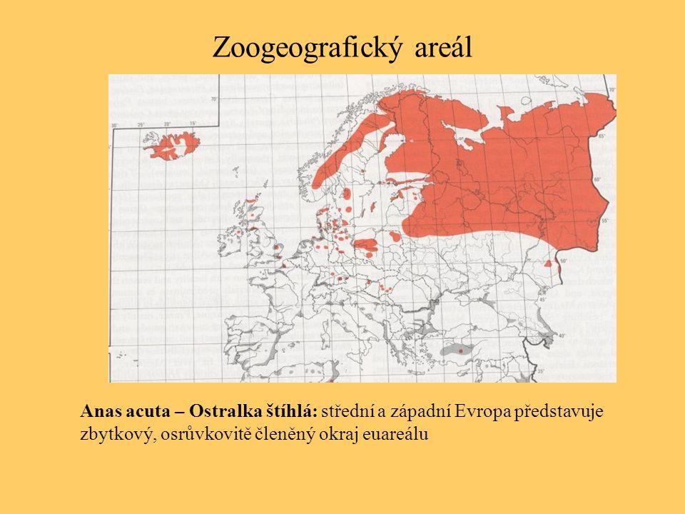 Zoogeografický areál Anas acuta – Ostralka štíhlá: střední a západní Evropa představuje zbytkový, osrůvkovitě členěný okraj euareálu.