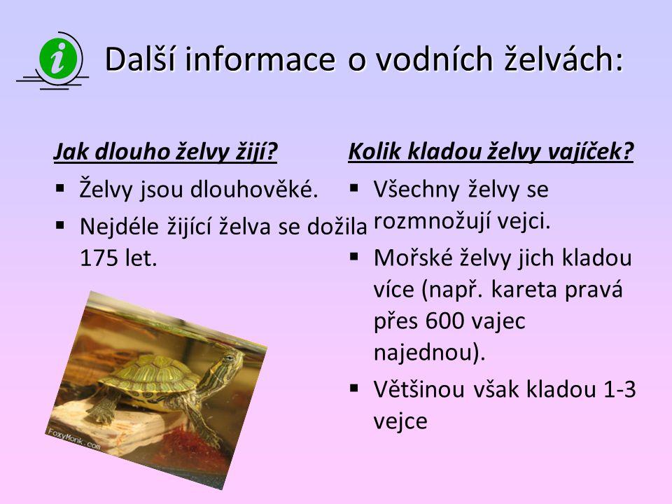 Další informace o vodních želvách: