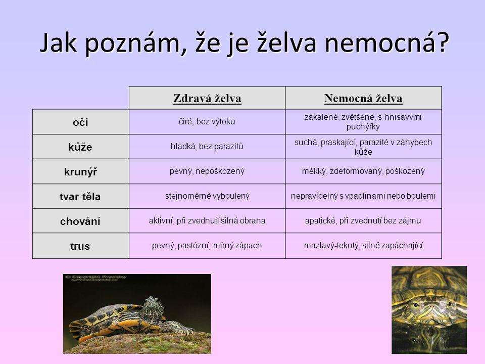 Jak poznám, že je želva nemocná