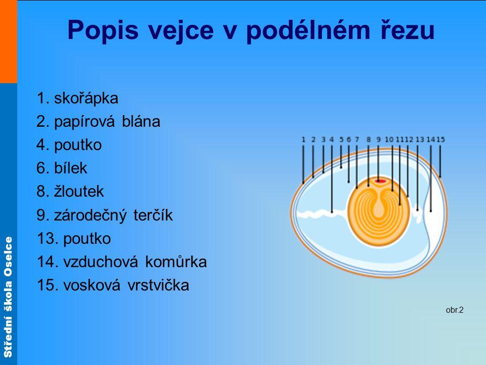 Popis vejce v podélném řezu