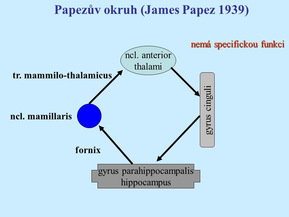 gyrus parahippocampalis