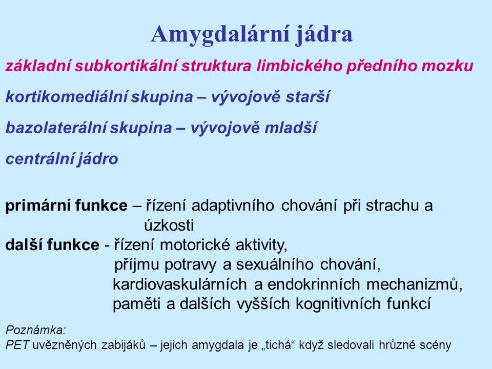 Amygdalární jádra základní subkortikální struktura limbického předního mozku. kortikomediální skupina – vývojově starší.