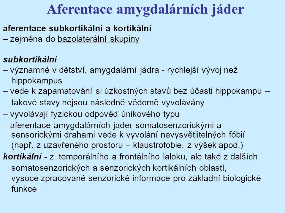 Aferentace amygdalárních jáder