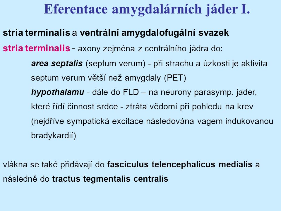 Eferentace amygdalárních jáder I.