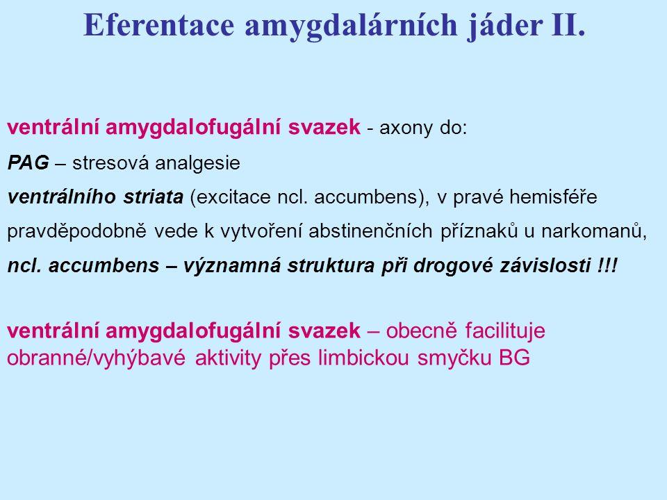 Eferentace amygdalárních jáder II.
